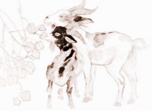2018年必发365手机登录首页羊如何催旺桃花