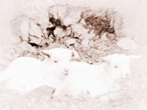 2018年属羊的人今年怎么转运.jpg