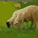 生肖羊的人格魅力 教你如何與屬羊人相處