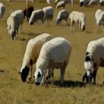 生肖羊2020年流年不利 應該如何轉運