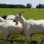 属羊的今年多大了2021 生肖羊2021年多大年纪