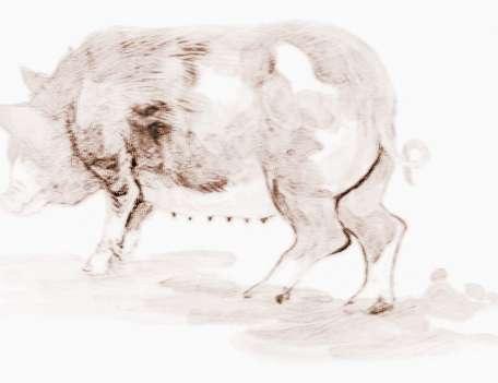 [属猪的性格特点]属猪人五行性格特点