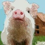 屬豬今年財運如何 生肖豬提升財運的方法