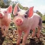 留意一下六月出生的属猪人命运好吗