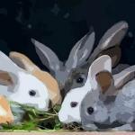 1963年属兔2020年刑太岁要佩戴什么好,63年生肖兔犯太岁怎么化解