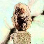 1980年属猴2022年冲太岁运势怎么样,80年42岁生肖猴犯太岁破解方法