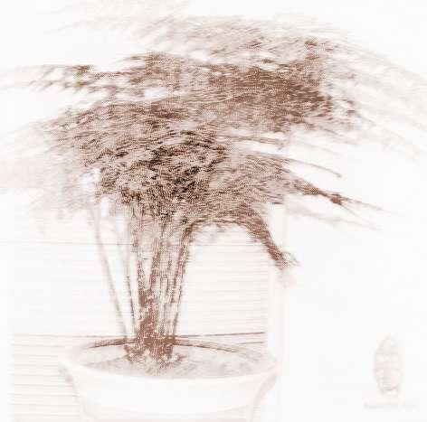 家居龙8国际官方网站植物摆设那个方位龙8国际官方网站好