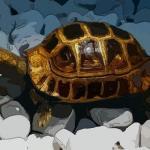 烏龜擺件有什么講究與忌諱