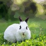 生肖兔缺乏上进心 如何用风水改善