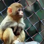 2021年生肖猴旺运风水布局