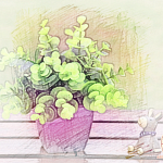 风水摆放植物