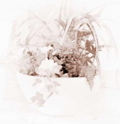 客厅摆放植物风水禁忌有哪些?家居摆放植物风水禁忌有哪些?