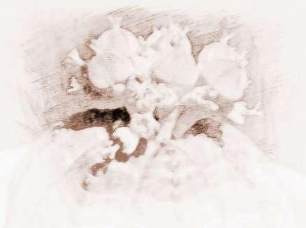 盆景花边素材