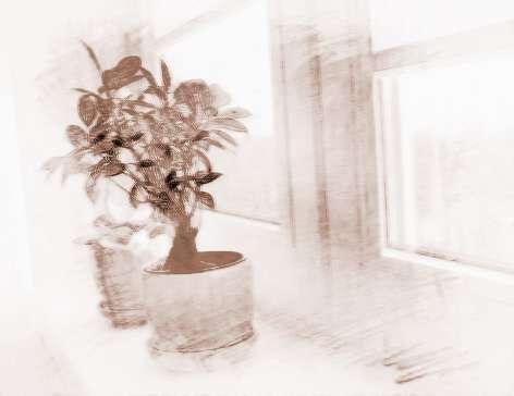 适合室内养的植物在摆放时有何风水讲究?