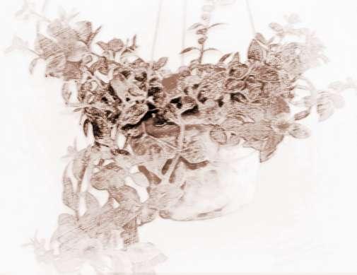 植物根的次生结构结构横截面图