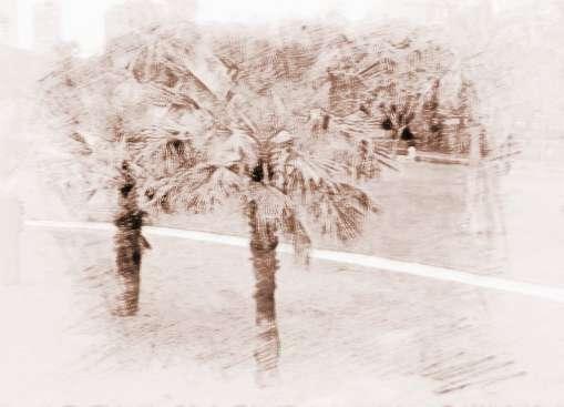 啄木鸟等动物也可能造成棕榈树