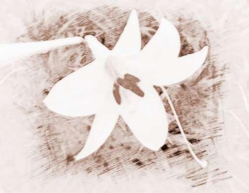 水仙花的花语|家居中水仙花风水的摆放要点