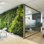 辦公室內擺放大型風水植物有哪些講究