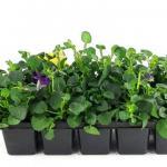 家中哪些房间适合摆放风水植物催旺财运?