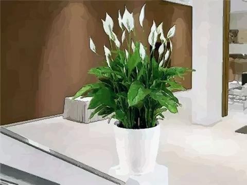 植物不可亂養,這幾種植物會破壞住宅風
