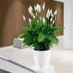 植物不可亂養 這幾種植物會破壞住宅風水