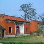 农村房屋旁边有大树 对住宅风水是否有帮助