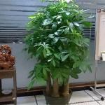 招财植物不宜摆放在家里什么地方