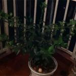 不同房间适合种养的绿植不同