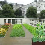 庭院菜园风水禁忌有哪些