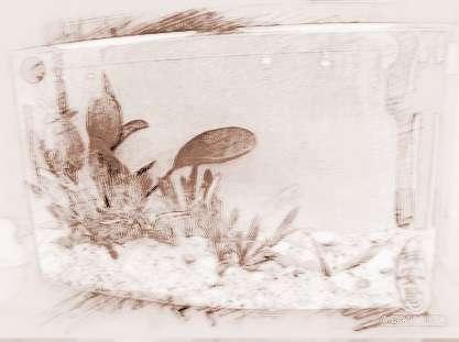 鱼缸摆设风水