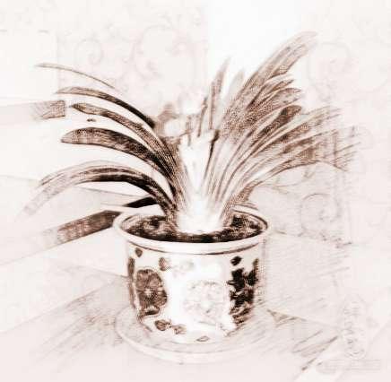 客厅摆放什么植物好招财