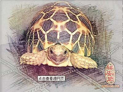招财龟的风水