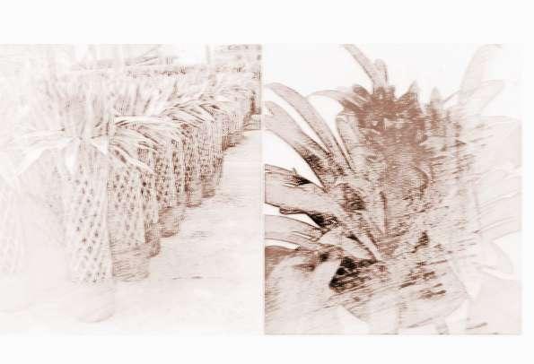 必看的家居室内植物风水学   一、大门植物摆放风水学   大门是我们进家的第一道屏障,作为一家的门户,大门也是常常放置绿植的区域,若大门正对楼梯,可用剑叶红、鱼尾葵、棕竹化煞。摆放在相冲处。又如大门正对着阳台窗口产生煞气,可用仙人掌、玫瑰、玉麒麟 化煞,也可盆栽葫芦化煞。   二、玄关   玄关是进家门之后的第一个家居空间,这里也理所当然的需要摆放室内植物来作为装饰物。大型植物加照明、有型有款的树木及盛开的兰花盆栽组合等设计,都适用于玄关。另外,玄关与客厅之间通常都是采用联通设计,因此可以考虑摆