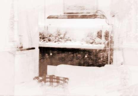 客厅风水禁忌鱼缸的摆放位置