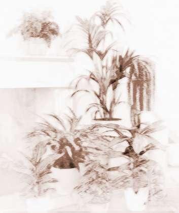 客厅风水植物摆放讲究