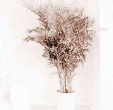 客厅风水植物摆放有何禁忌