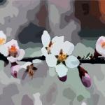 家居風水布局如何能招桃花?