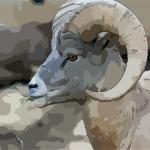 2021年生肖羊与太岁相冲 需要注意哪些风水讲究