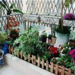 在陽臺種養植物所要注意的風水問題