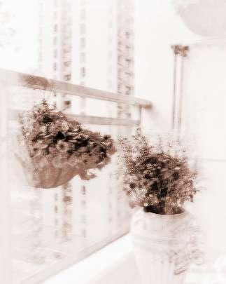 家里養什么植物風水好
