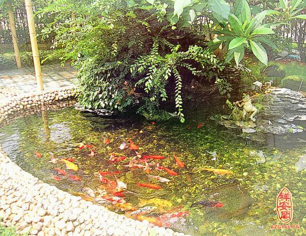 庭院鱼池的风水