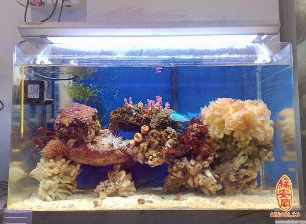 壁纸 海底 海底世界 海洋馆 水族馆 600_440