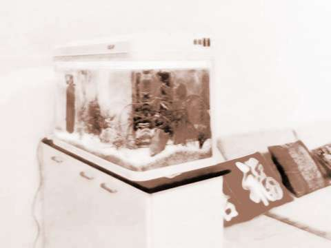 饭馆鱼缸摆放状态风水图解