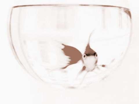 家中摆放鱼缸需要注意什么东西_家中摆放鱼缸需要注意什么?挑选鱼缸很重要
