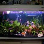 室內養魚要注意魚缸的擺放風水,擺的好招財進寶!