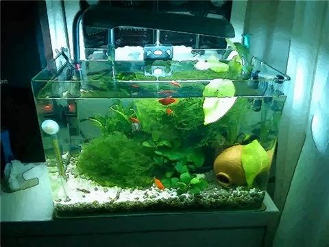 金鱼缸摆放有什么风水讲究和注意事项