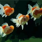 關于家中養魚的一些風水知識,你了解多少?