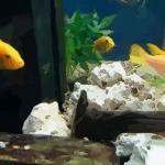室內魚缸的正確擺放位置 魚缸的擺放位置在哪里
