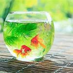 家里的鱼死了对家运有何负面影响