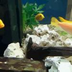 鱼缸放在客厅什么位置最好 客厅鱼缸摆放风水